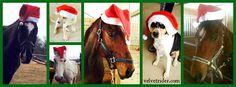 Happy Holidays from Velvet Rider!