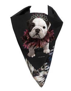 TEO JASMIN, TEO QUEEN, bouledogue, couronne, foulard    http://www.teojasmin.com