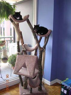 Make a Cat Tree House