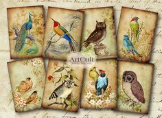 Digital Download Printable Images for art projects. Available through ETSY. BIRD TAGS ON Scroll Paper Digital Collage Sheet by ArtCult