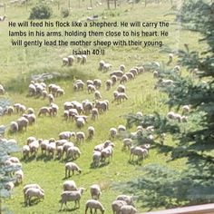 Scripture Pictures, Spiritual Warfare, Flocking, Spirituality