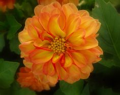 Flower # by jefg99, via Flickr