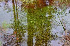 DI Kalevi Puukon mielestä rahkasammal on erinomainen vedenpuhdistaja. #ympäristösovittelu #jakautuukosuomi @koneensaatio