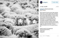 パタゴニアとステラ・マッカートニー、アルゼンチンの羊毛業者との取引中止を決定   Fashionsnap.com