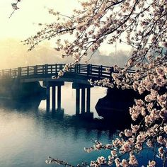 Springtime Chill by Vitty Masciale ♥ on SoundCloud