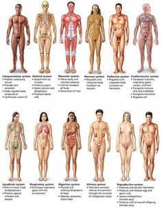 Some of the professions I will to start is anatomy, Physiology and biology. this will prepare to have an understanding of the body. Medical Facts, Medical Science, Medical Information, Medical School, Human Anatomy And Physiology, Medical Coding, Body Anatomy, Nursing Notes, Body Systems