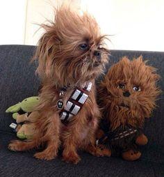 Meet Chewbacca Dog.