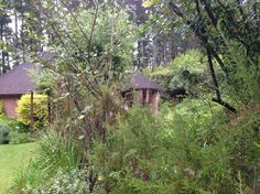 Set in glorious gardens and forest is Coral Tree Cottages. These 6 self-catering cottages provide a peaceful haven when traveling along the Garden Route. They are situated on the N2 between Knysna and Plettenberg Bay in South Africa. www.coraltreecottages.co.za