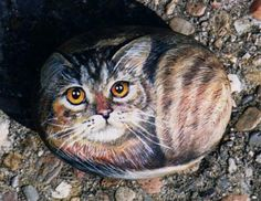PLEASE SEE MY NEW STUFF I LOVE BOARD (DIY STUFF I LOVE) Tabby cat painted on the rock | Flickr - Photo Sharing!