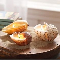Make shell candles!http://static.tipjunkie.com/resize/400x400/r/decorate.tipjunkie.com/wp-content/decorate-thumbs/how-to-make-your-own-shell-candles-inspired-by-pottery-barn.jpg