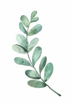 Watercolor - Leaf on Behance More - Nature Drawings - . - Watercolor – sheet on Behance more – nature drawings – - Watercolor Leaf, Watercolor Plants, Watercolour Painting, Tattoo Watercolor, Watercolor Animals, Watercolor Landscape, Watercolor Pattern, Watercolors, Simple Watercolor Flowers