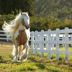 Palomino-colored paint horse with BEAUTIFUL hair. By Jenny's Site on Flickr.