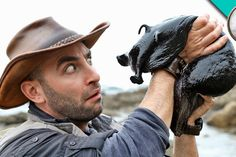 """In his series """"Beyond the Tide"""", host Coyote Peterson of Brave Wilderness enlisted the assistance of tidal pool expert Aaron Sanchez on a search for a giant black sea hare in Southern C… Black Sea Hare, Coyote Pack, Brave, Sea Slug, Pet News, Weird Creatures, Sea Creatures, Animal House, Aloe Vera"""