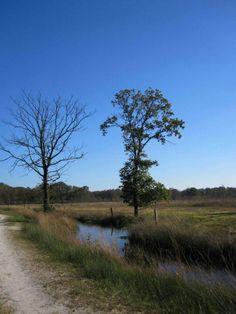 Bargerveen, Drenthe.
