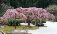 Japanese Garden #Portland