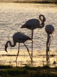 Flamingos, Flamencos | Flickr - Photo Sharing!