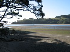 beach trees New Zealand, Trees, Beach, Water, Plants, Outdoor, Gripe Water, Outdoors, Tree Structure
