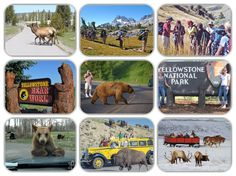 Private tours to view wildlife are a great way to get up close and personal with nature's finest specimens, Yellowstone National Park is Amazing. Yellowstone National Park, National Parks, Viewing Wildlife, Tours, Pets, Amazing, Nature, How To Make, Blog