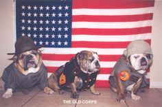 A Collection of Bulldogs and Bullybreed Dogs in the Army & Navy *updated 25-05-2013* [youtube= [youtube= [youtube= [youtube= [youtube= [youtube= [youtube= If you Like this Blog please hit that …