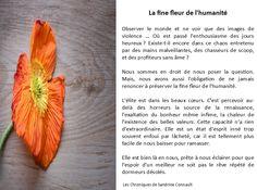 La fine fleur de l'humanité, par Les Chroniques de Sandrine Connault