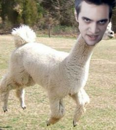 What a shame the poor groom's bride is a llama