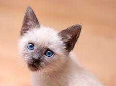 Funny cats (10 foto)