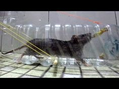 Plastic bottle Mouse trap - home made Rat and Mouse trap... • How 2 build ~ The bottle rat! : Naver Blog http://blog.naver.com/jcdo3810/10047052358