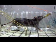 Plastic bottle Mouse trap - home made Rat and Mouse trap... • How 2 build ~ The bottle rat! : Naver Blog http://blog.naver.com/jcdo3810/10047052358