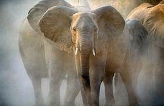 Elephant Power Animal