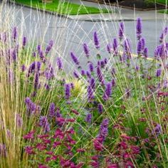 Native Garden – Creative Landscapes, Inc. Landscape Design Small, Creative Landscape, Tropical Plants, Pacific Northwest, Flourish, Garden Inspiration, Palm Trees, Nativity, Woodland