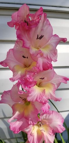 Gladiolus Gladiolus Double Petals Petunia Bonsai Flower Short Height Garden Flowers Indoor Or Ourdoor Plant Pot Tropical Art Print Tropical Decor by ArtByJulene on Etsy ⊱╮ღÁngelic Múseღ╭⊱ Gladiolus More Neem oil soap recipe: a Natural Soap for Eczema Perennial Flowering Plants, Flowers Perennials, Planting Flowers, Flowers Garden, Home Flowers, Leaf Flowers, Diy Flowers, Gladiolus Tattoo, Gladiolus Flower