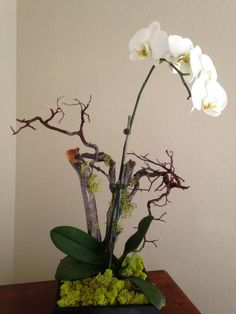 """Pac 8 Orchids - Orchid pot in a """"rainforest"""" style arrangement by Pac 8 Orchids -- there's live, light green moss on the tree branches & surface - Los Angeles, CA, United States"""