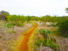 "Saatchi Art Artist Billy Mitchell; Photography, ""The Path Through Purgatory"" #art"