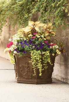 This is one of my favorite container combinations.  I do two of them every year, they always turn out so beautiful.