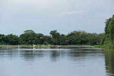 Rio Cuiabá, que divide os Estados de Mato Grosso e de Mato Grosso do Sul - Um pouco sobre o Pantanal - www.viajandocomaman.com.br - Foto: Amandina Morbeck.