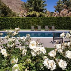 The life in #PalmSprings
