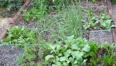 7 Crops to Kick Off Your Spring Garden - Hobby Farms