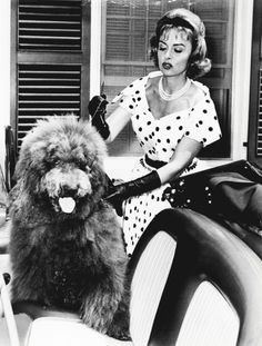 Donna Reed c. We always watched the Donna Reed show! The Donna Reed Show, Star Show, Old Hollywood Stars, The Good Old Days, Vintage Photography, Animal Kingdom, Movie Stars, Fur Babies, Famous People