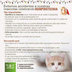 Evitemos accidentes a nuestras mascotas celebremos #SinPirotecnia   Importante información compartida por @angelesdelosanimales para todos.  #PetsWorldMagazine #RevistaDeMascotas #Panama #Mascotas #MascotasPanama #MascotasPty #PetsMagazine