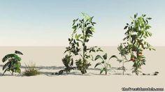 #plants #trees - tf3dm http://tf3dm.com/3d-model/plants2-37109.html