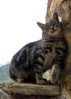 Sweet Kitty at St. Hilarion Castle, Cyprus (by TavFactor-Roberta Cerri)