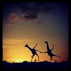 "@jovanabi's photo: ""#instagram  #instamood  #instalove  #instacolor  #iphone  #instacute  #instalovers  #instagood  #iphone5  #instaweb  #instaonly  #instapic  #iphoneonly  #instafunny  #animals #instafriends #tbt #best #friends  #love  #free #clouds #sunset #summer  #good  #follow  #facebook"""
