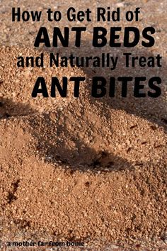 how to get rid of ant beds and naturally treat ant bites
