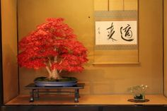 The red leaves especially pop against the blue pot. Don't choose a pot simply b/c it's attractive. What personality does your tree have? What style? Depth of pot & shape need to be considered. Legs & lip of pot (some simple some moe elegant) need to be considered. Warm overhead lighting, gold-tone background & scroll