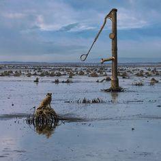 Pompa / Fotoklimat / Fotografia / Konceptualna woda, jezioro, pies, kwadrart, fotomontaż, fotografia, foto, surrealizm, klimat, na ścianę, pejzaż, rzeka, morze