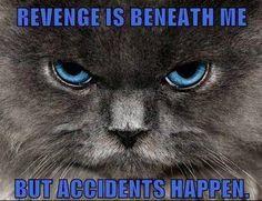Revenge is beneath me..but accidents happen
