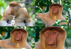 Bimberek Meme Lord, Wtf Funny, Best Memes, Funny Animals, Haha, Fandoms, Humor, Places, Animales