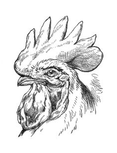 Vintage Chicken Clip Art | rooster and chickens painting books | Antique Images: Bird Clip Art ...