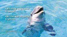 எதிர்பார்த்து வாழ்வதல்ல வாழ்க்கை!  எதிர் கொண்டு வாழ்வதே வாழ்க்கை!  http://tamilnanbargal.com/