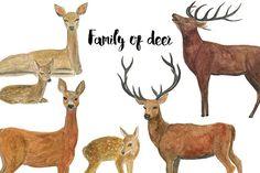 Watercolor deer by ramika on @creativemarket